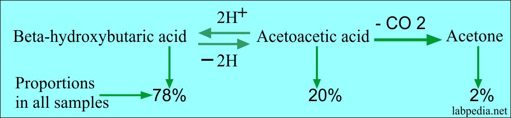 Ketone bodies formation and their ratio