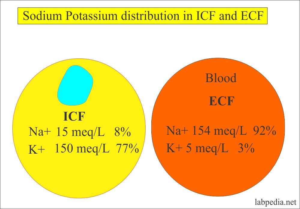 Sodium and Potassium distribution in the cells and blood
