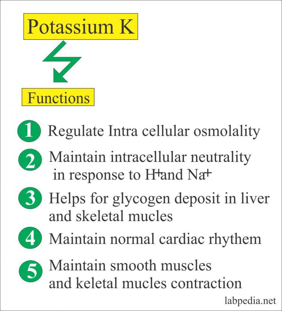 Potassium functions