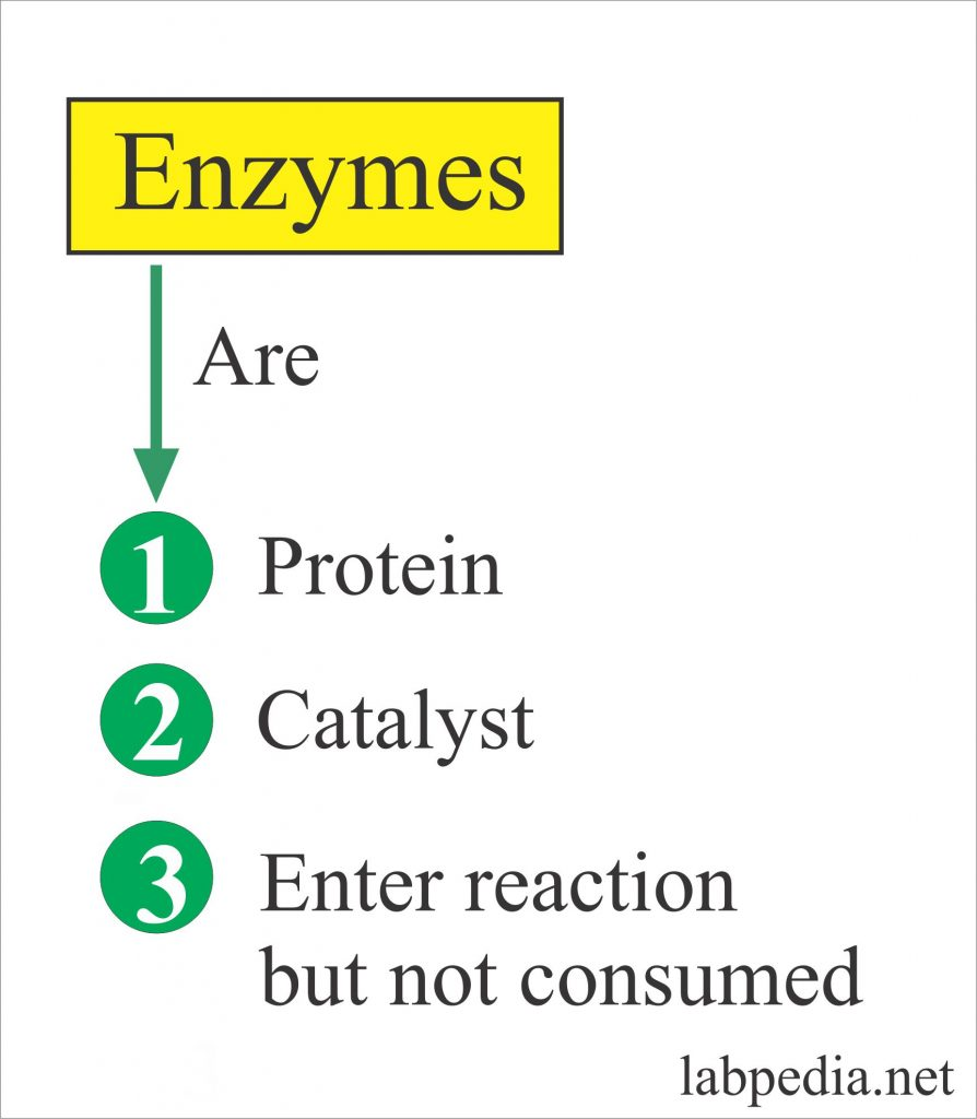 Enzymes – Part 1 –  Introduction