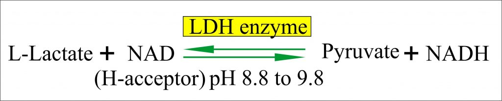 LDH enzyme chemical reaction