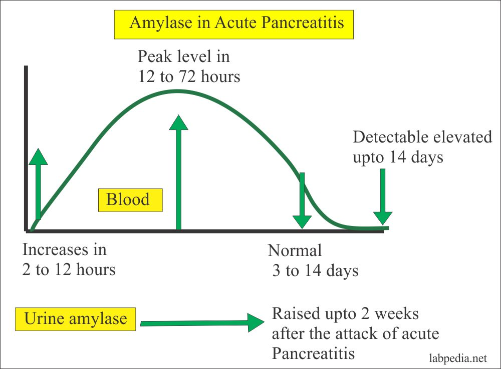 Amylase level in the acute pancreatitis
