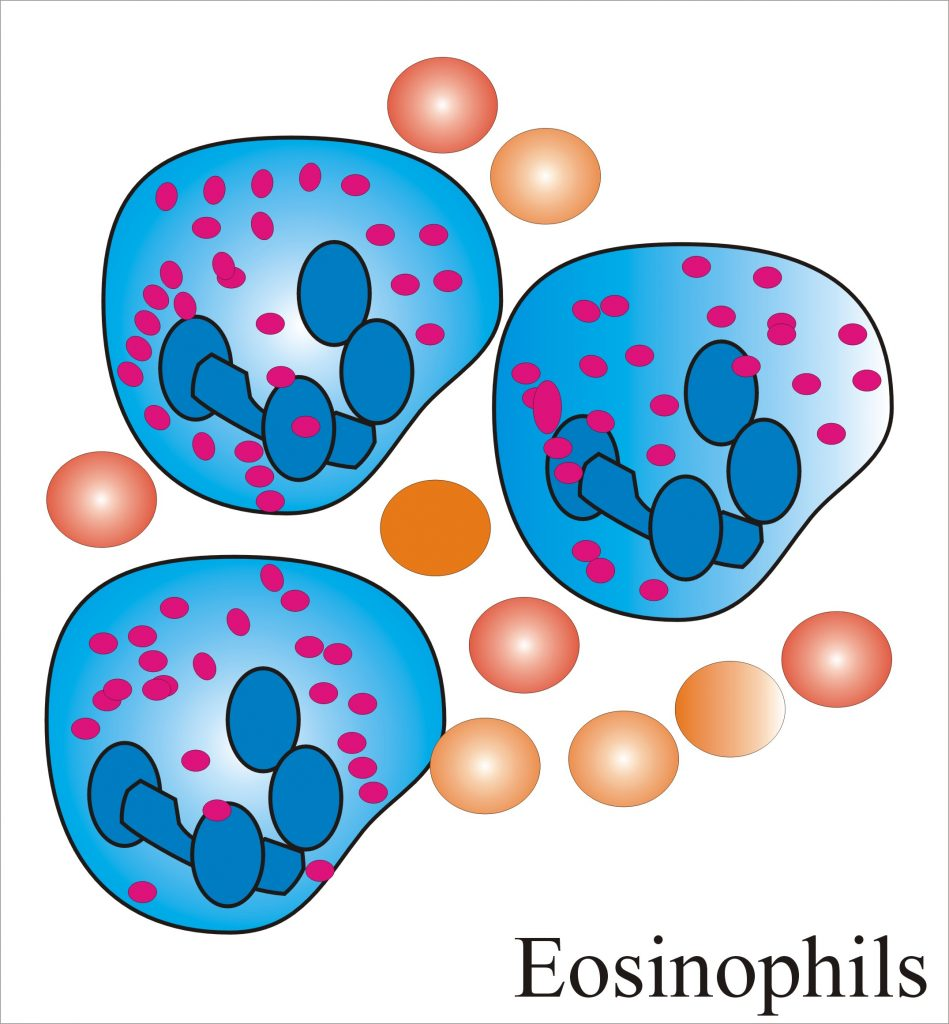 Eosinophil Count (Absolute Eosinophil  count)