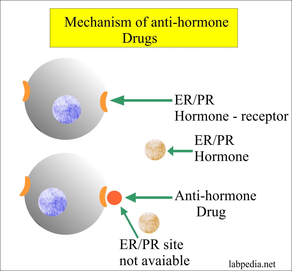 Anti-hormone drugs reacts with receptor