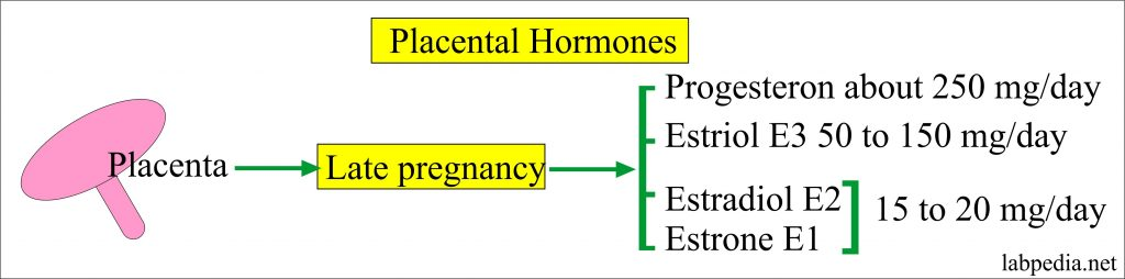 Hormones of the placenta