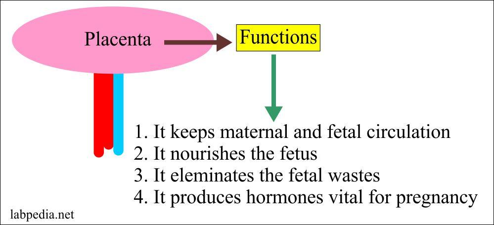 Examination of Placenta and Umbilical Cord