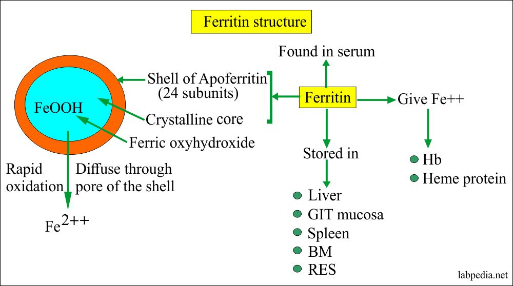 Ferritin sources and structure
