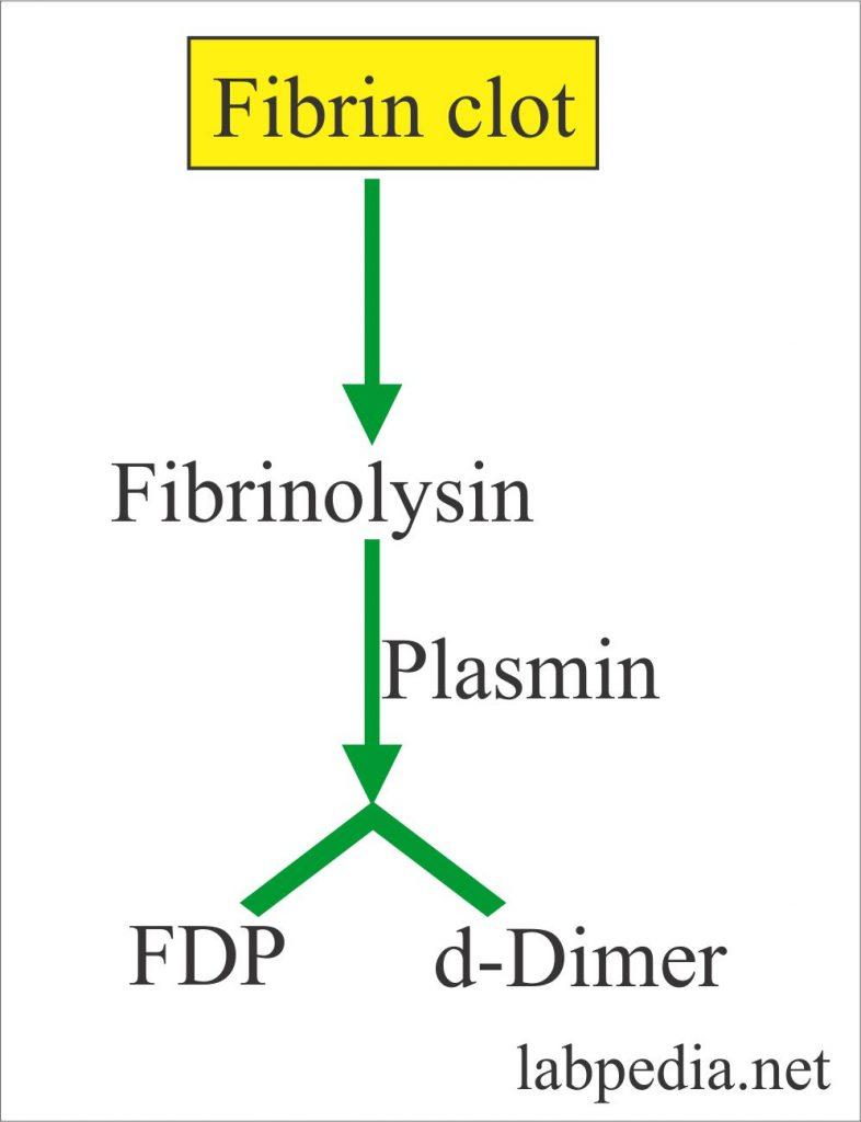 Fibrin, FDPs and d-Dimer