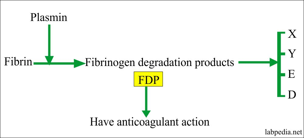 Fibrin and FDPs action