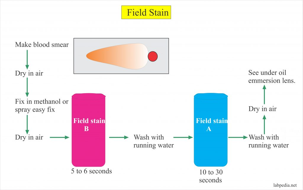 Field Stain A and B,  Preparation of the solution