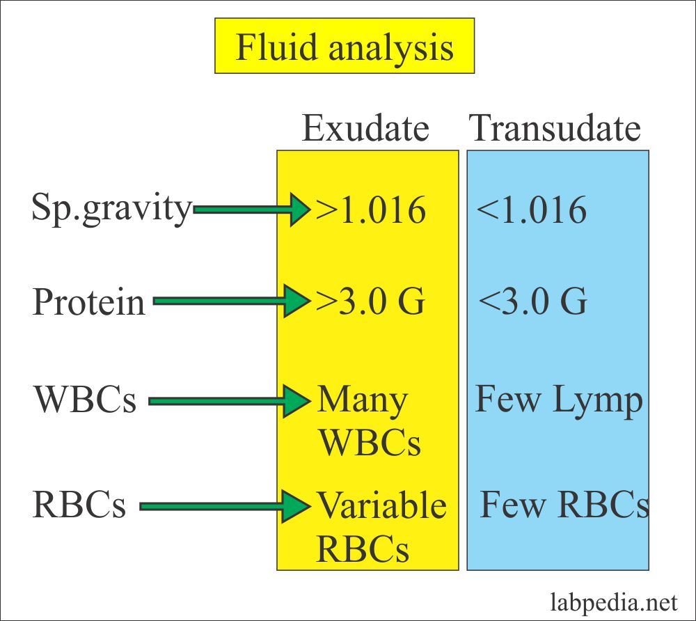 Fluid Analysis – Part 1 –  Normal findings,  Pleural, Pericardial, and ascites,  Difference of Transudate and Exudate