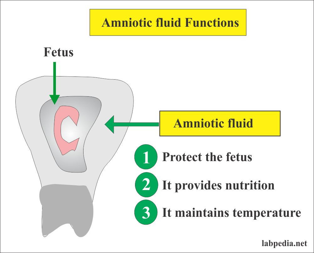 Fluid Analysis – Part 5 –  Amniotic fluid Examination (Amniocentesis), Normal and Abnormal Findings