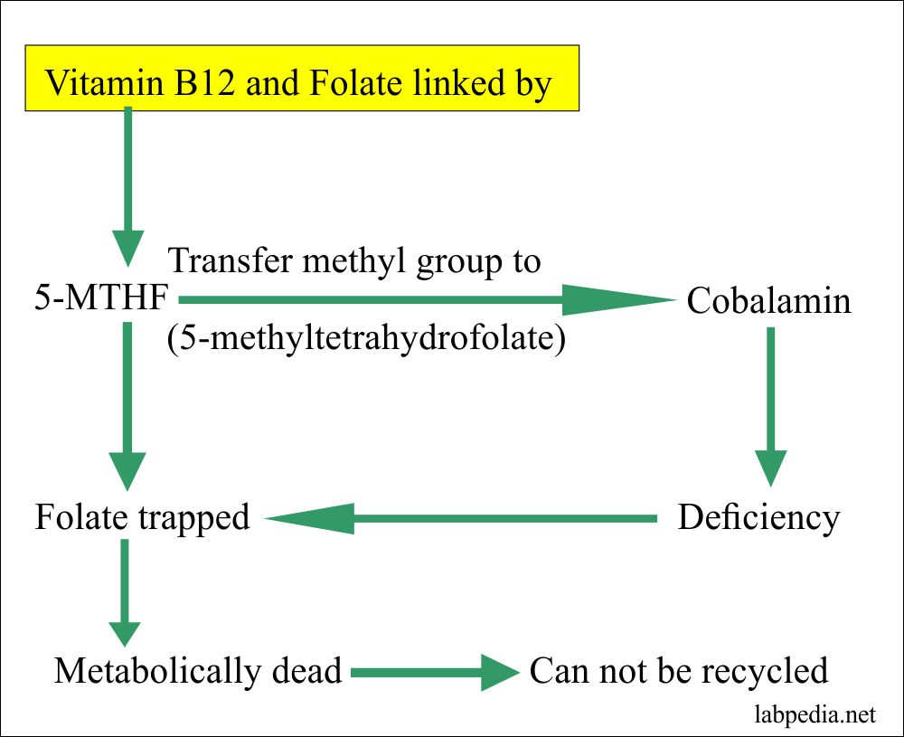 vitamin B12 and folate linked by