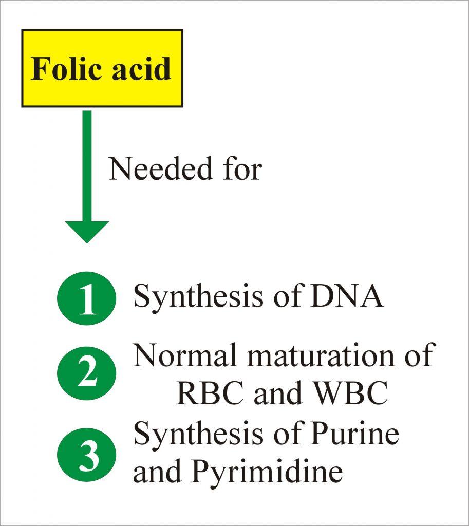 Folic Acid and Folate