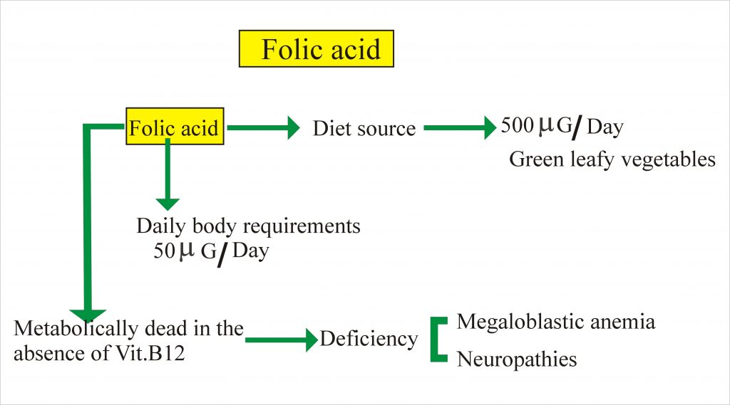 folic acid source and daily requirement
