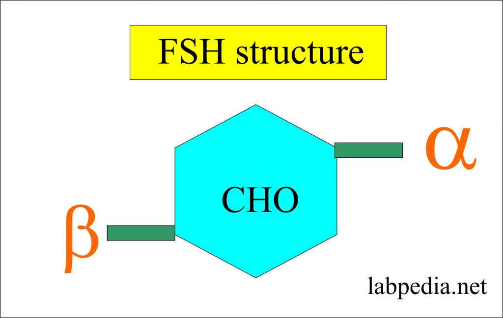 Follicle stimulating hormone structure