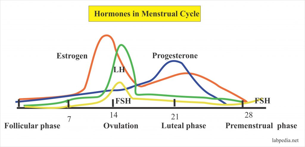 Hormonal changes in the menstrual cycle