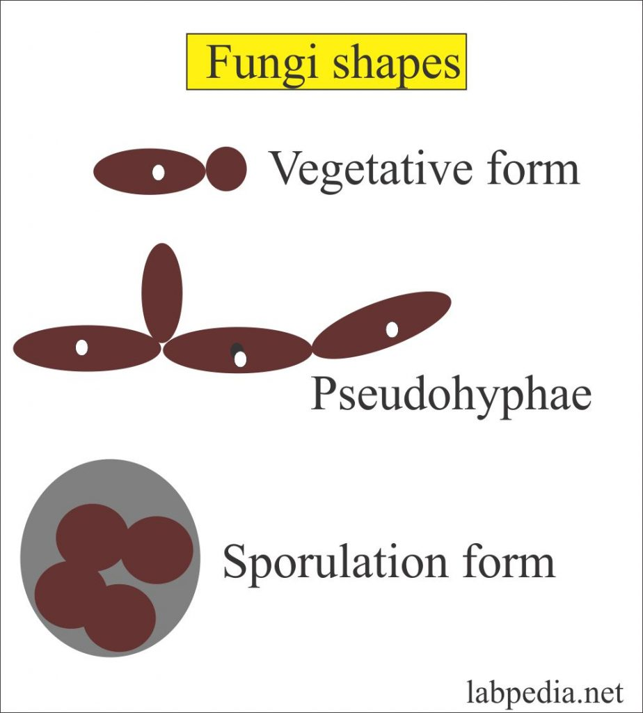 Different shapes of fungus