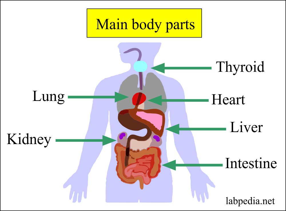 General health – Part 3 – Biochemical profile,  Chemistry profile For Various Diseases