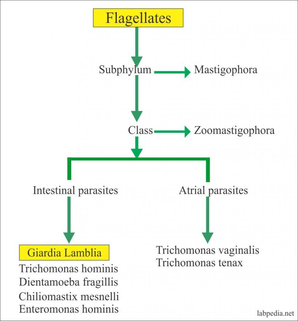 giardia toxin