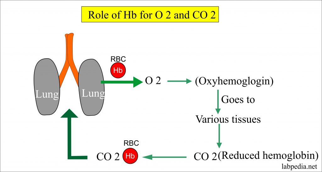 Role of Hb is to carry oxygen