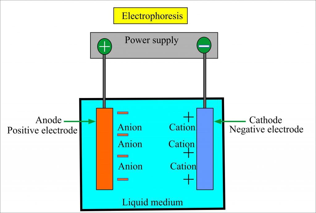 Diagrammatic representation of Electrophoresis