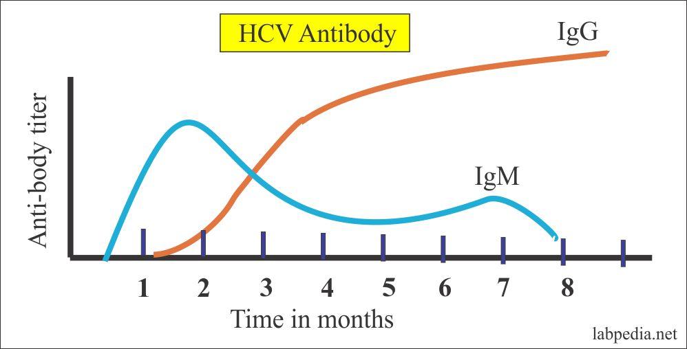 HCV Antibody profile