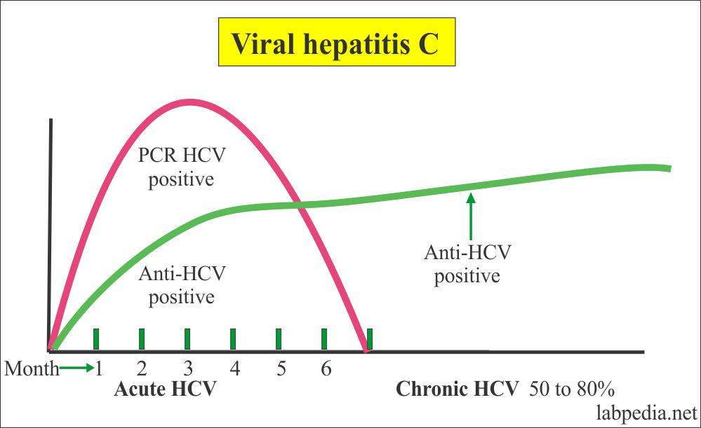Hepatitis C Virus serological profile