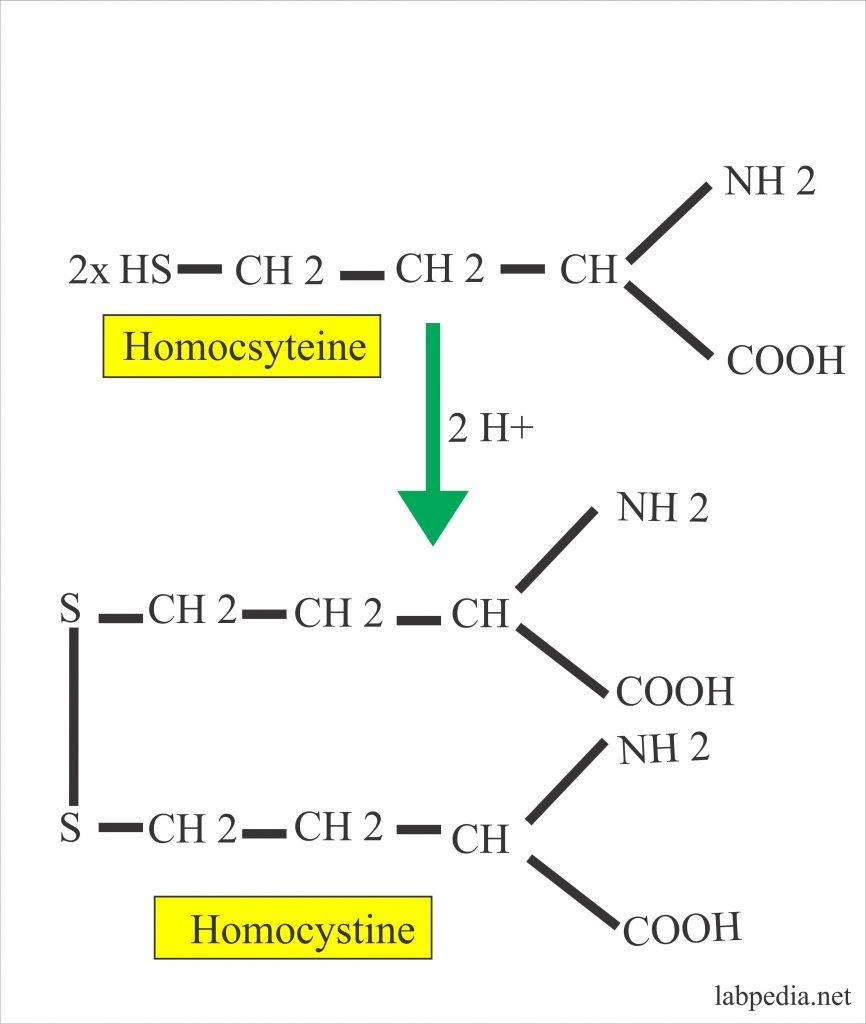 Homocysteine (Homocysteinemia)