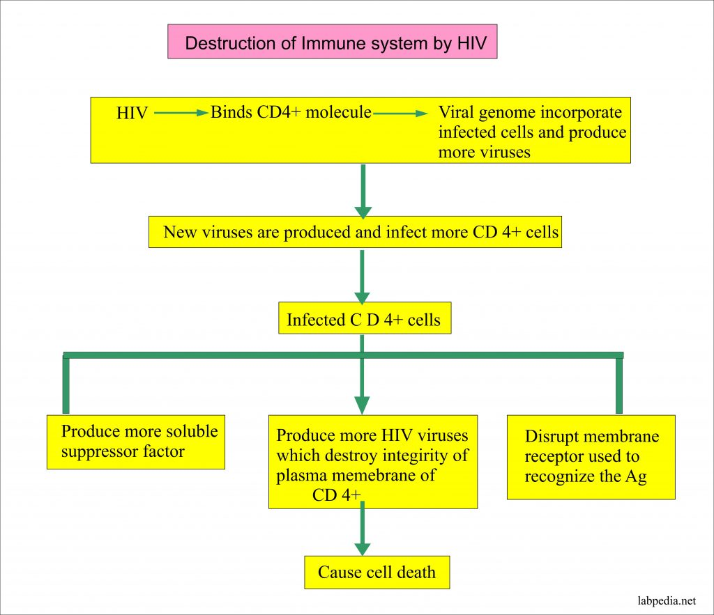Destruction of the tissue by The Human Immune Deficiency Virus