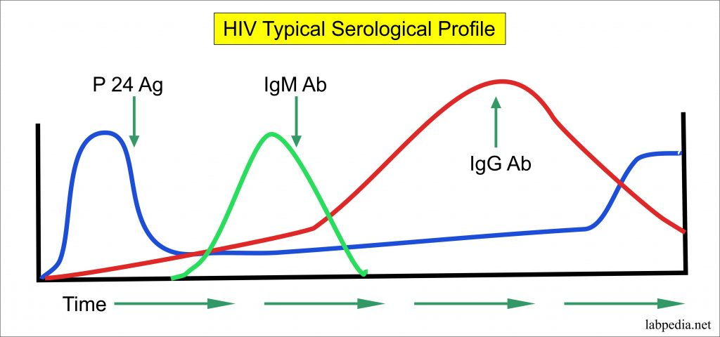 Human immunodeficiency virus, HIV virus, AIDS (Acquired immunodeficiency syndrome)