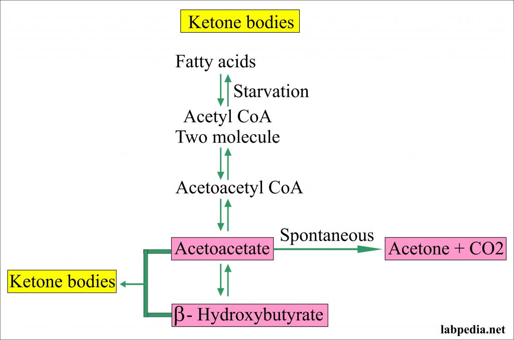 Ketone Bodies Formation from Fatty Acids