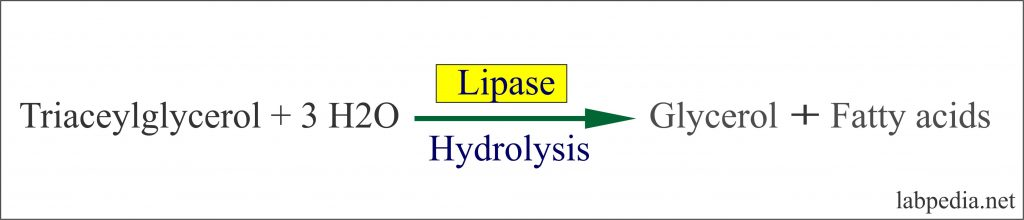 Lipase Enzyme action on Triacylglycerol