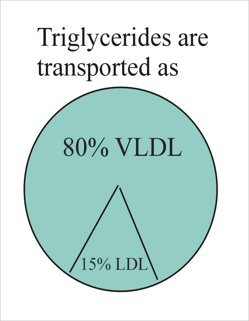 Transportation of triglycerides