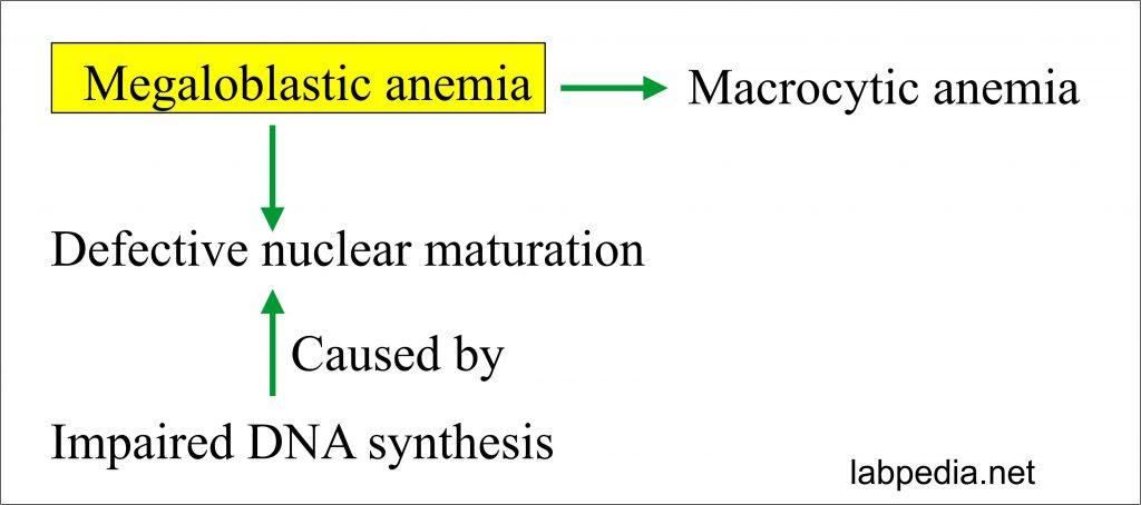 Megaloblastic anemia mechanism