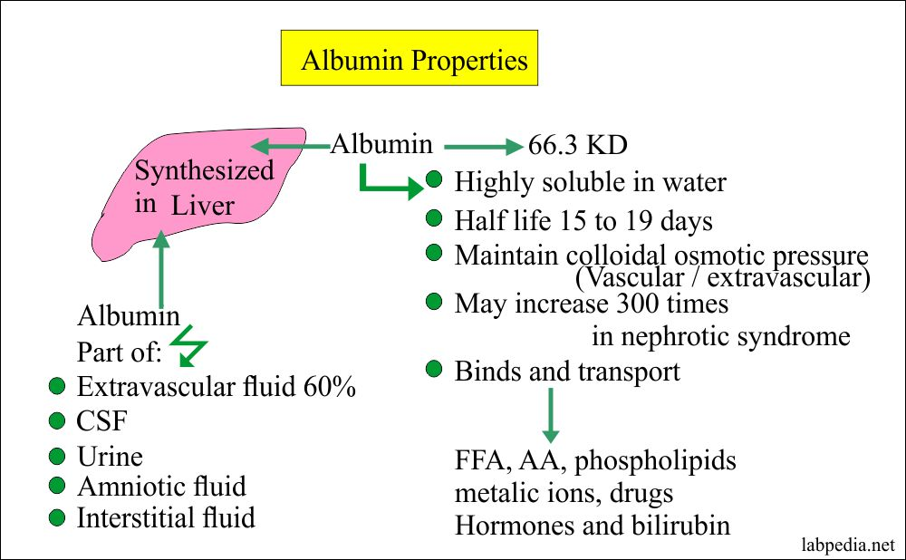 Properties of the Albumin