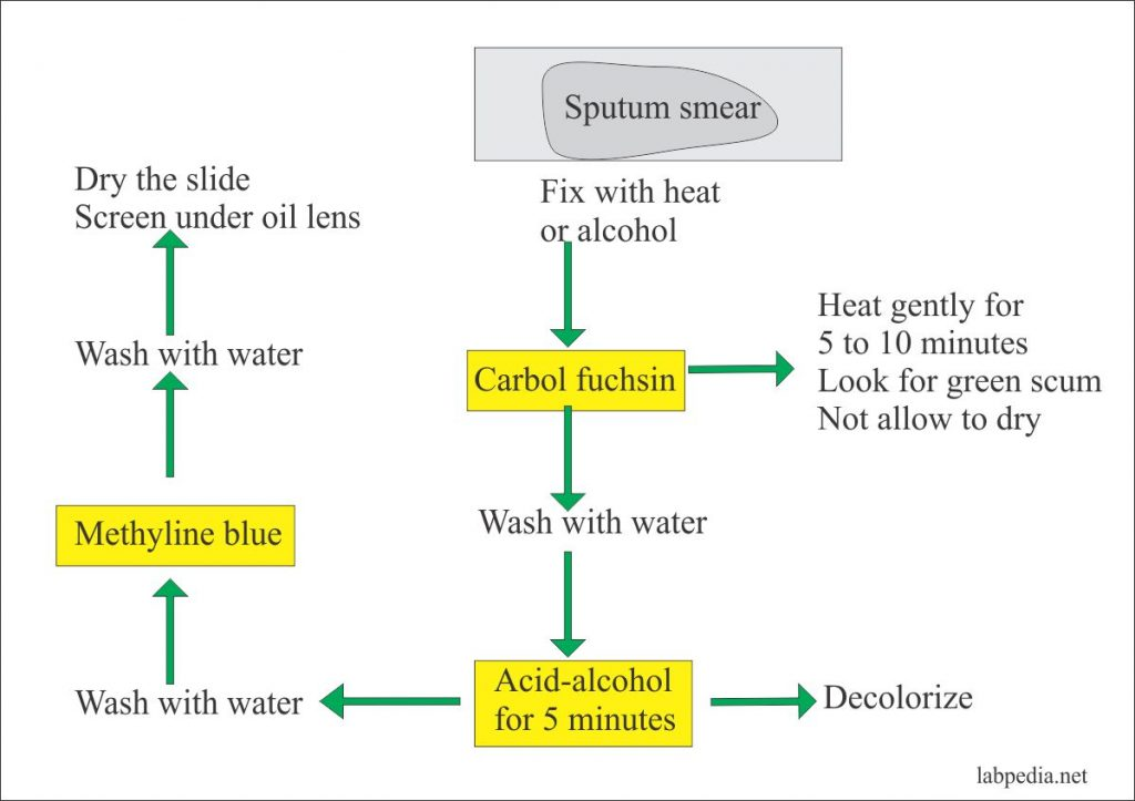 AFB Stain Procedure