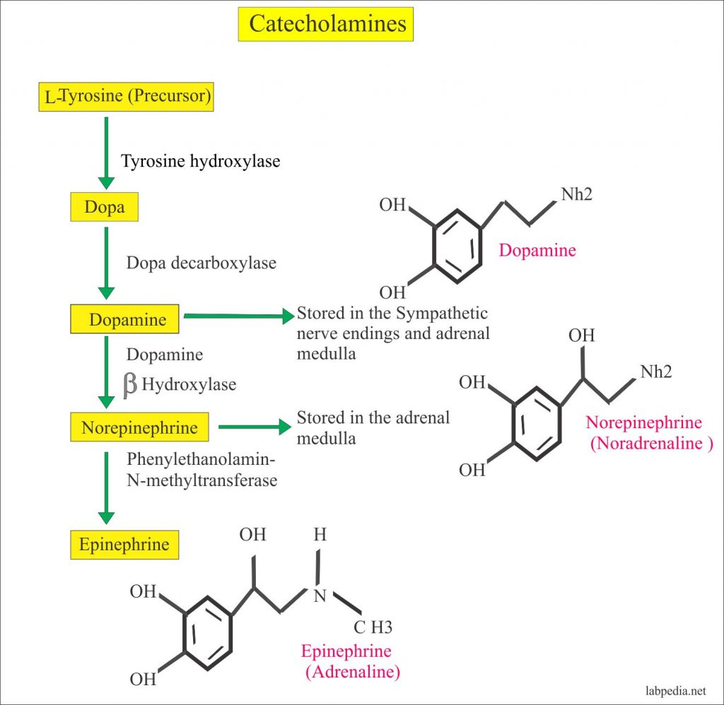 Catecholamines and its Formula