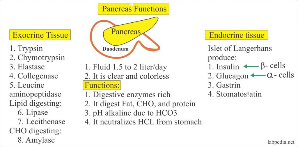 Functions of Pancreatic Enzymes