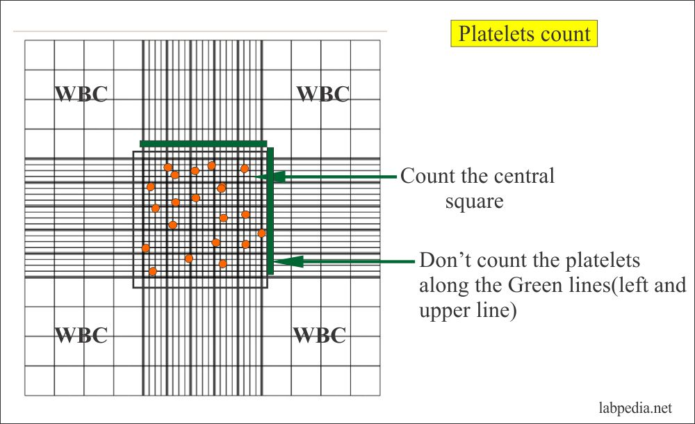 Neubaur Chamber for Counting the Platelets
