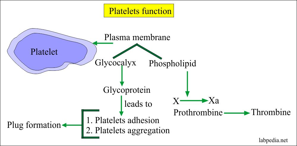Function of platelets