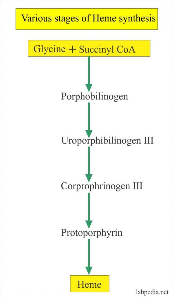 Porphyrins, Porphobilinogen