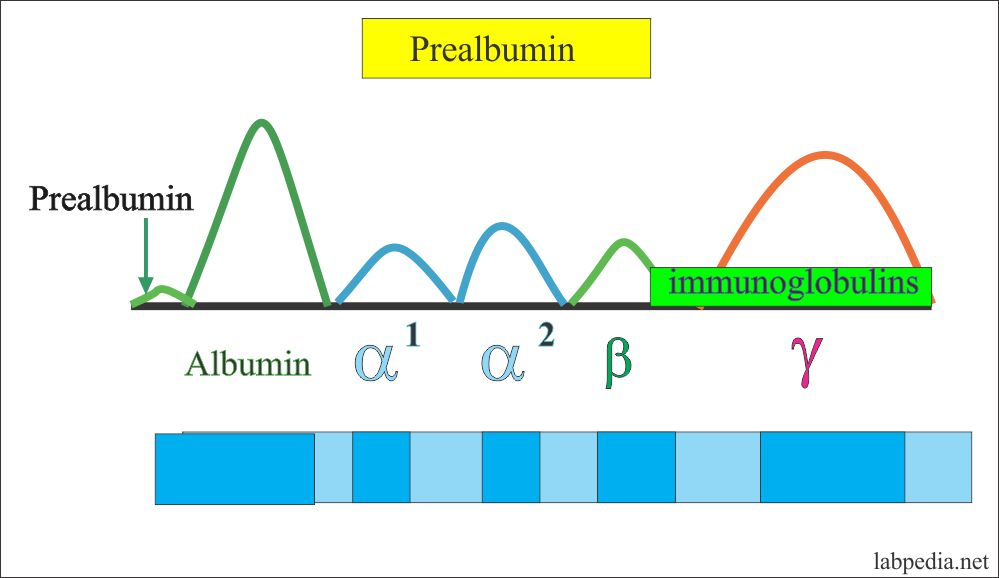 Prealbumin in Electrophotresis