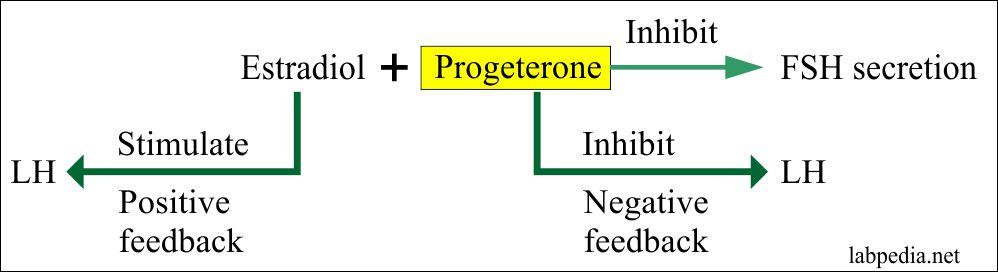 Progesterone Assay