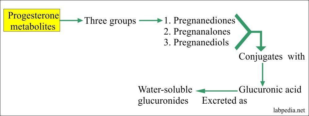 Progesterone Metabolism