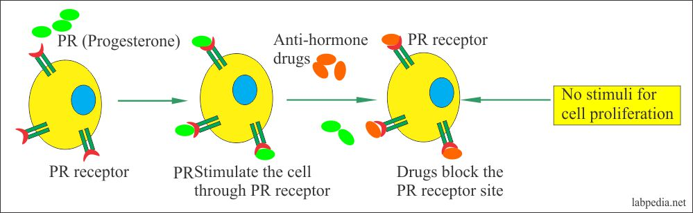 Role of Progesterone Receptor and The Drugs