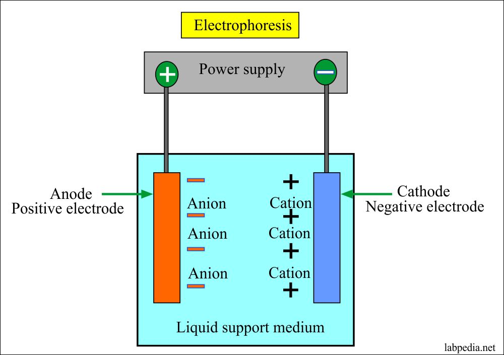 Electrophoresis Principle