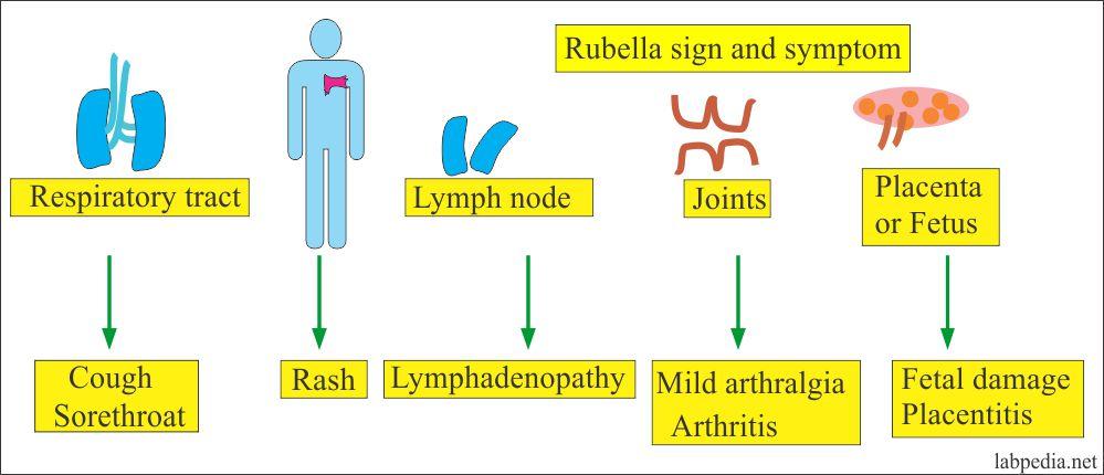 Rubella Virus Signs and Symptoms