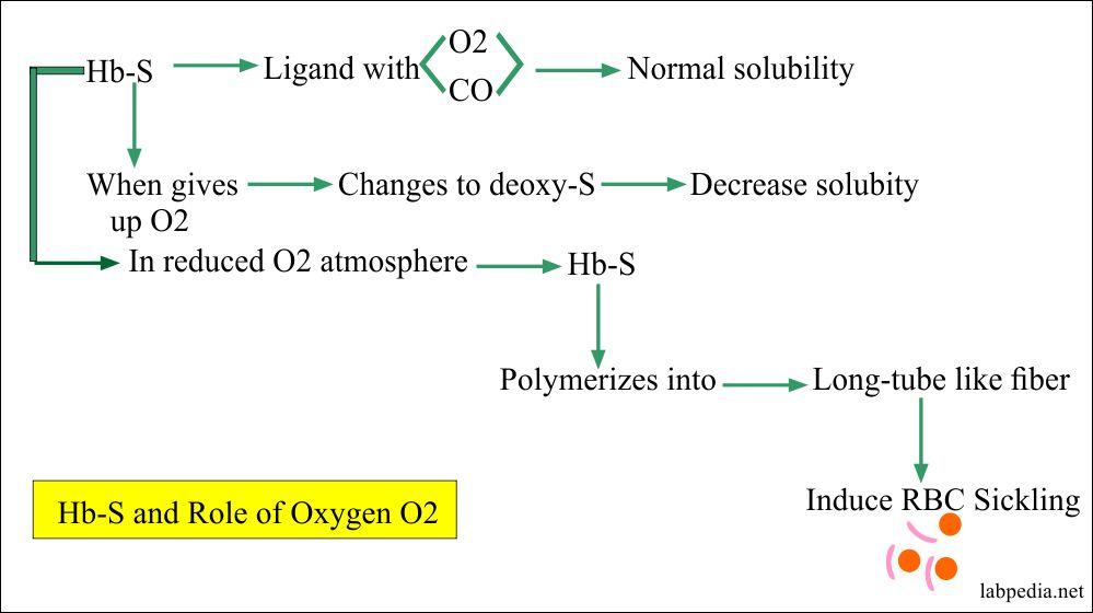 Role of Hemoglobin as Oxygen carrier Role