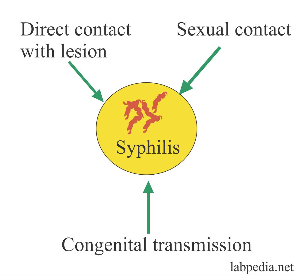 Transmission of Syphilis